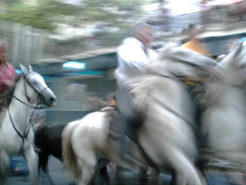 taureau et manadiers