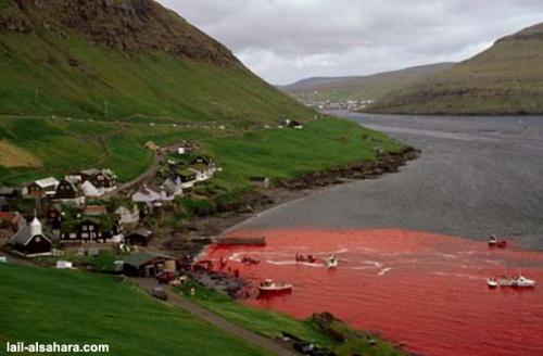 mer de sang