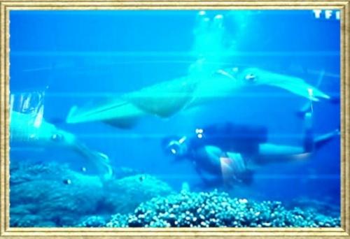 Sauver la mer