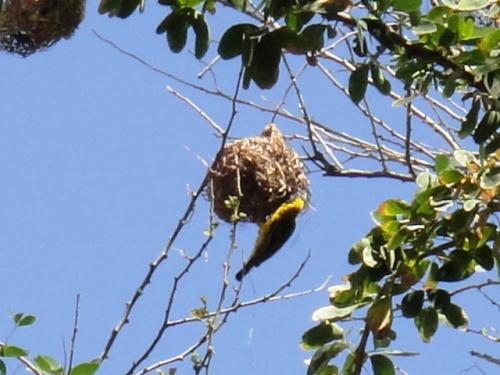 un nid chausson