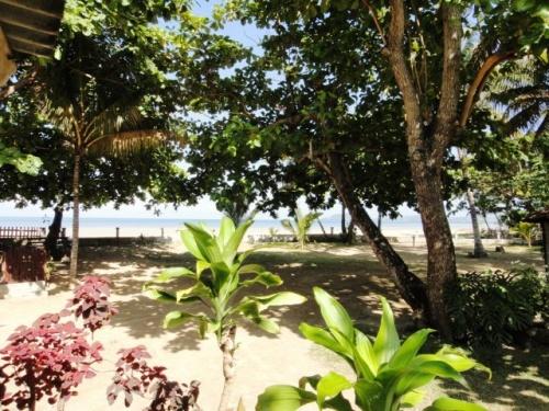 Jardin du bungalow aux cocôtiers