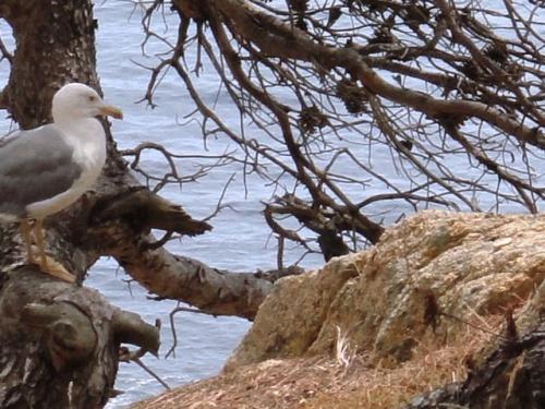 Le nid proche