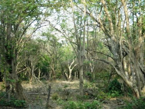 Forêt de Playa Grande