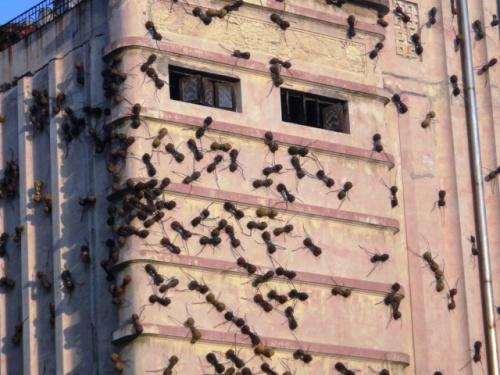 Des fourmis géantes envahissent l'immeuble !