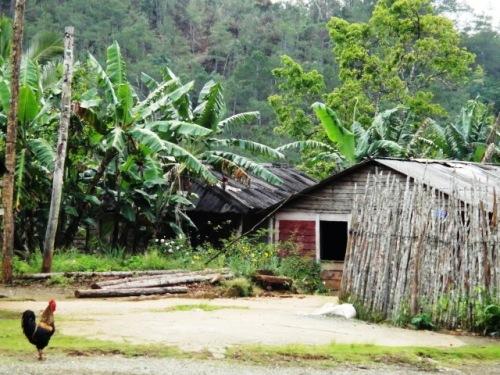 Petite case et sa palissade