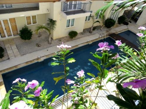 Les roses amères de la petite terrasse
