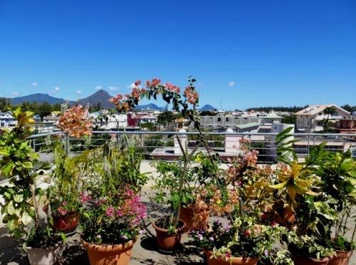 Mon petit jardin sur les toits