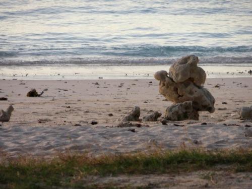 Sculpture de coraux, anonyme, abandonnée à la prochaine marée