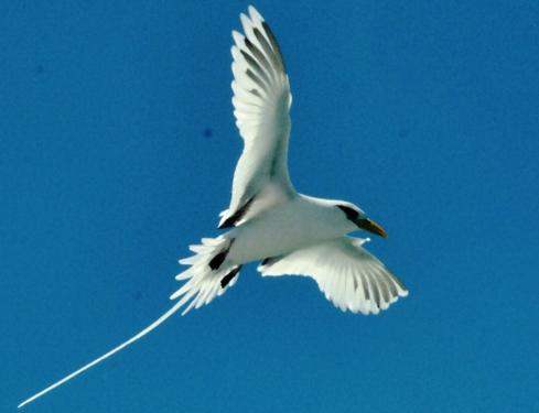 Comme un oiseau en liberté !