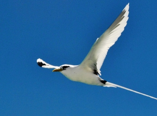Libre comme l'oiseau en liberté !