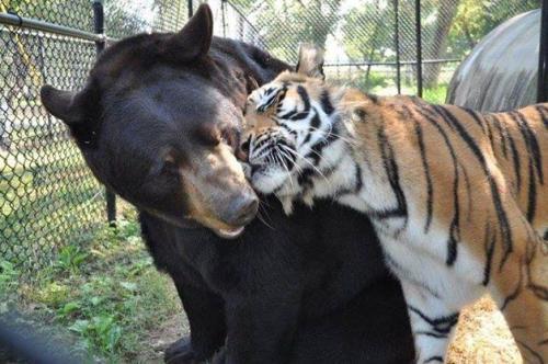 Noah's Ark Animal SanctuaryFacebook