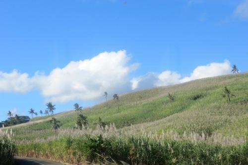 Champs de canne à sucre sur la route du Sud