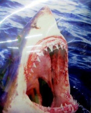Agresser l'adversaire comme des requins