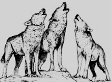 Loups (Web)