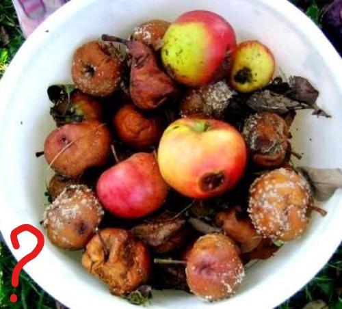 assiette-de-pommes-pouries-sur-le-net_ink_li